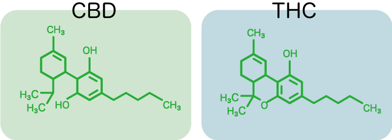 CBDとTHCの違いの構造式の説明図